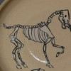 Macabre Animal: Horse